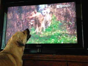 dogtv_watching