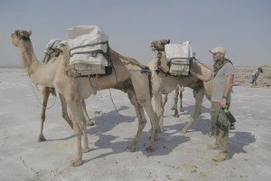 Ed loading salt mined on the Danakil salt flats onto camels, the traditional way